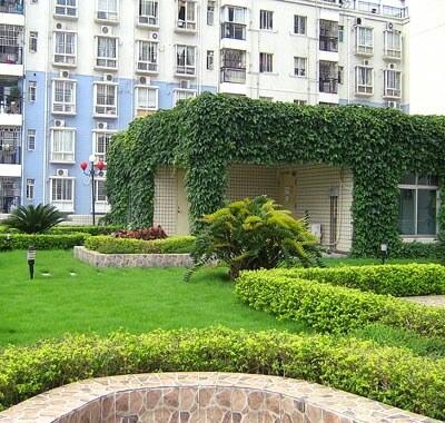 深圳龙岗工程质监站园林绿化养护
