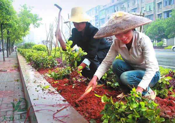 栽植苗木团队