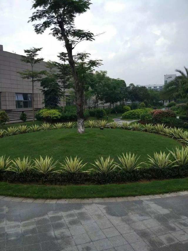 大业香港亚博官网工程-龙岗国宝造币厂绿化养护项目