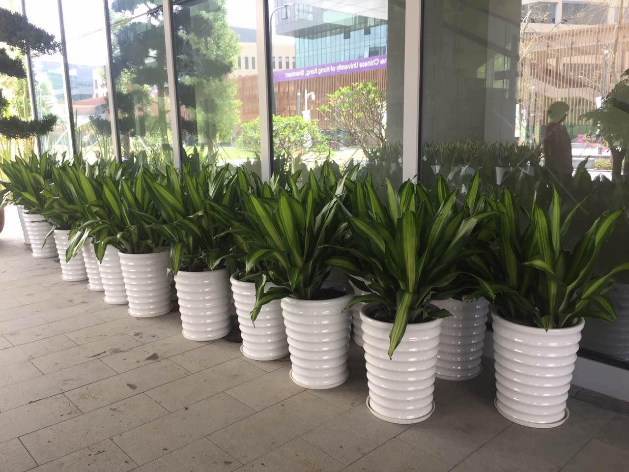 香港中文大学(深圳)盆栽绿植采购项目